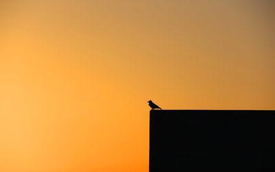 Michael Gordon's winning sunset photo taken at Kibbutz Lavi in northern Israel.