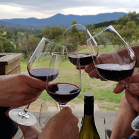 Diane Shonberg entered this holiday photo titled L'chaim taken at a Yarra Valley winery.