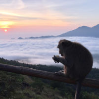Edward Baral entered this photo was taken at sunrise overlooking Mt Agung in Bali.