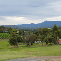 Peter Shonberg entered this holiday photo of his daughter Rebecca at a Yarra Valley winery.