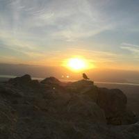 Daniel Gilad entered this photo taken from Masada at dawn.