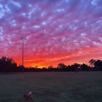 Rachel Shnider entered this photo of sunset at Caulfield Park.