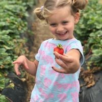 Yael Rothschild entered this photo of Sienna Richardson picking strawberries at Sunny Ridge, Victoria.