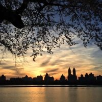 Aaron Neubauer entered this sunset photo taken in Central Park, New York.