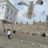 Rod Hartman entered this photo taken in Senate Square, Helsinki after a seagull had taken food from his wife (standing in the background).