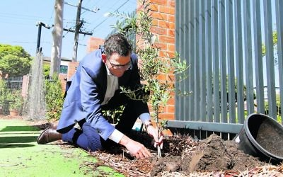 Premier Daniel Andrews plants an olive tree to launch Sholem Aleichem College's new wing. Photo: Peter Haskin