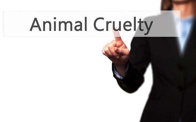 Animal Cruelty. Image: Jacek Dudzinski, Dreamstime.com