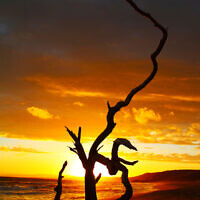 SUNSET FINALIST A: Sunset at Point Addis, Victoria. Photo entered by Jonathan Shaw.