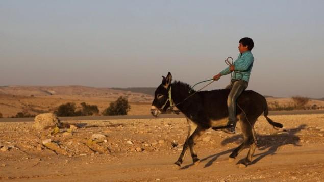 طفل بدوي يمتطي حمارا في القرية البدوية ام الحيرام (فلاش 90)