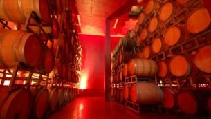 براميل النبيذ في مصنع النبيذ في مستوطنة بساجوت في مركز الضفة الغربية (تقدمة من المصنع/ جي تي أ)