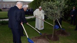 البابا فرانسيس يزرع شجرة زيتون في حديقة الفاتيكان مع الرئيسين الاسرائيلي والفلسطيني (حايم يتسحاق/ جي بي أو)