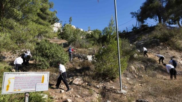 متطوعون يبحثون عن ارون سوفير في منطقة القدس، الثلاثاء 26 اغسطس 2014 (فلاش 90)