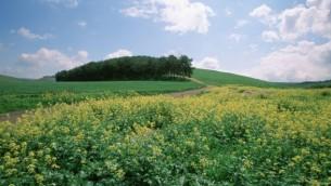 مشهد  لأرض مغطاة بالأزهار في جلبواع بالجليل. (Doron Horowitz/Flash90)