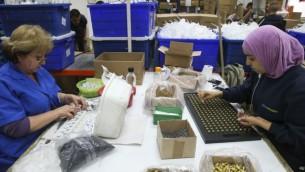 يهود وعرب يعملون في مصنع صودا ستريم في مستوطنة ميشور ادوميم في الضفة الغربية، 2 فبراير 2014 (Nati Shohat/Flash90)
