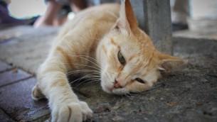 قطة شارع في مدينة حيفا (Garrett Mills/Flash 90)