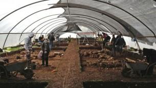حفريات أثرية في أحيهود، في الجليل السفلي، حيث تم إكتشاف أقدم بذور فول مدجنة. (Yaron Bibas, Israel Antiquities Authority)