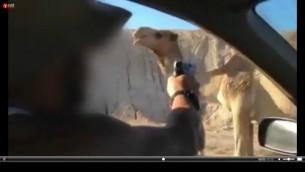 صورة شاشة من فيديو يظهر جنود يطلقون النار على جمل اثناء مرورهم بجانبه في اواخر شهر نوفمبر 2015 (Screenshot)