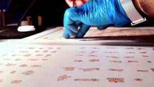 شظايا من مخطوطات البحر الميت -- من الحفظ إلى الطاولة الرقمية. (Shai Halevi, courtesy Israel Antiquities Authority)