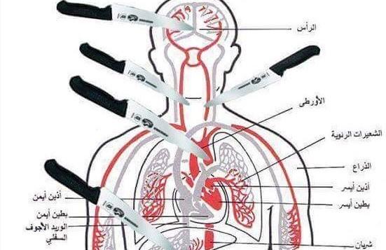 """مخطط تشريحي تم نشره على فيسبوك من قبل زهران بربه في 8 أكتوير، 2015، يظهر أجزاء الجسم التي """"يُنصح"""" بإستهدافها عند طعن الضحية. (المصدر: MEMRI)"""