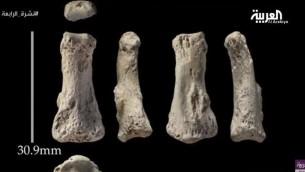 عظام بشرية من الاصبع الاوسط تعود الى قبل 90,000 عام تم العثور عليها في السعودية، حسب ما اعلن في 17 اغسطكس 2016  من قبل الهيئة السعودية للسياحة والتراث الوطني (screen shot: AlArabiya)