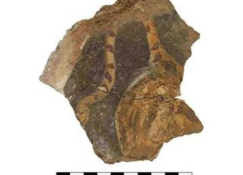 تصوير جصي يظهر صورة ذيل نمر يعود تاريخه إلى أوائل القرن الثاني ميلادي. (Hebrew University of Jerusalem)