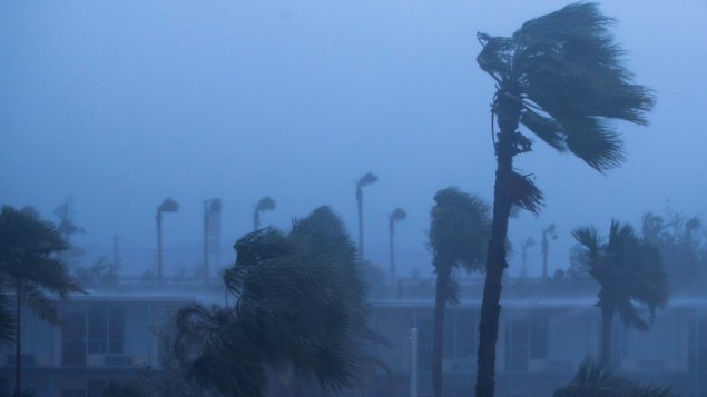 اشجار النخيل تتمايل في ولاية فلوريدا في الولايات المتحدة مع وصول الاعصار ماثيو الى سواحلها، 7 اكتوبر 2016 (Drew Angerer/Getty Images/AFP)