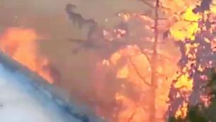 صورة للحريق الذي اندلع خارج مبنى شقتي غلعاد موليان ويوسف غورين في 24 نوفمبر، 2016 في حيفا. تم إنقاذ المبنى من النيران بمساعدة عمال بناء فلسطينيين. (Courtesy)