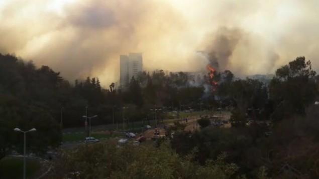 حريق في ضواحي حيفا، 24 نوفمبر 2016 (Israel police)