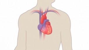 قلب بشري، صورة توضيحية. (YouTube screenshot)