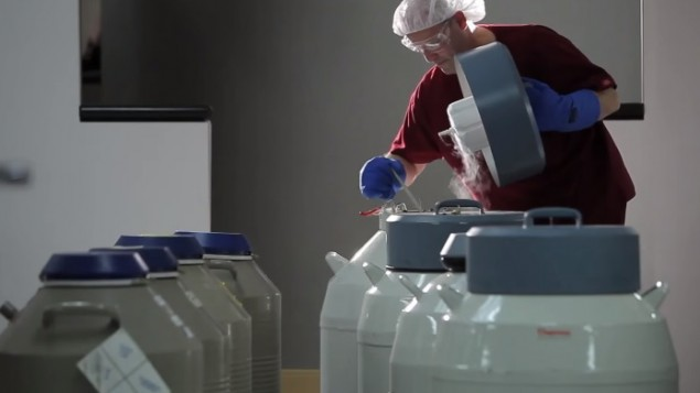 صورة  توضيحية: تجميد بويضات انثوية. (YouTube screenshot)
