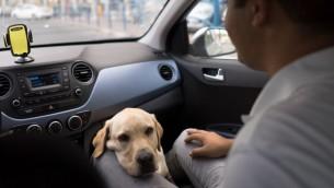 ونستون هو أول كلب ارشاد يملكه سليم. (Luke Tress/Times of Israel)