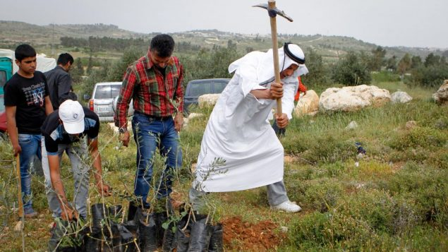 مسؤولين فلسطينيين مع ناشطي سلام اسرائيليين ودوليين يزرعون الاشجار في الضفة الغربية اتجاجا على سيطرة مستوطنين على اراضي، 9 ابريل 20116 (Wisam Hashlamoun/Flash90)