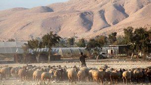 صورة توضيحية: راعي فلسطيني في وادي الأردن، 20 نوفمبر / تشرين الثاني 2009. (Yossi Zamir/Flash90)