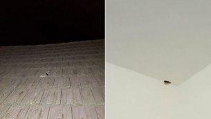 الأضرار التي لحقت بمنزل إسرائيل في المجلس الإقليمي شاعر هنيغف جراء اختراق رصاصة أطلقت من قطاع غزة باتجاه طائرات تابعة لسلاح الجو الإسرائيلي. (المجلس الإقليمي شاعر هنيغف)