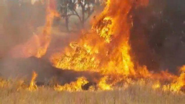حريق ناتج عن طائرات ورقية مشتعلة اطلقت من غزة، بالقرب من كيبوتس كيسوفيم، 25 مايو 2018 (Screen capture: Twitter)