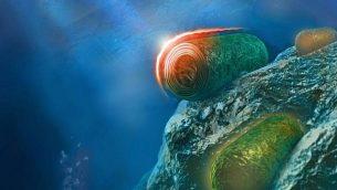 صورة توضيحية للبكتيريا الزرقاء. (Itay Goldshmid)