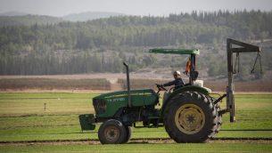 مزارع تايلندي في نيفي شالوم، المجاورة للطرون، والواقعة بين تل ابيب والقدس، 22 نوفمبر 2016 (Hadas Parush/Flash90)