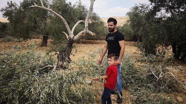 سكان محليون في قرية رأس كركر في الضفة الغربية يتفقدون أشجار الزيتون التي يُشتبه بأن متطرفين إسرائيليين قاموا باقتلاعها، 19 أغسطس، 2018. (Iyad Haddad/B'Tselem)