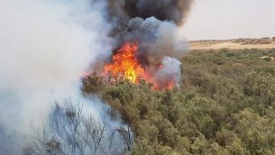 حريق أحراش بالقرب من كيبوتس رعيم شرقي حدود غزة، 25 يوليو، 2018.  (Courtesy Fire and Rescue Services Southern District)
