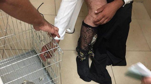 القبض على رجل حاول تهريب 40 من طائر الحسّون في جوارب شبكية  في معبر ألنبي الحدودي، 15 أكتوبر 2018 (الإدارة المدنية)