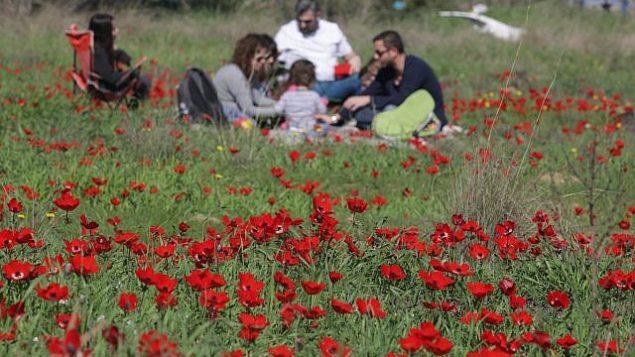 أزهار شقائق النعمان في جنوب إسرائيل، 03 فبراير 2018. (Nati Shohatl/Flash90)