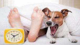 كلب يتثائب في السرير إلى جانب قدمين ومنبه. (Damedeeso, iStock by Getty Images)