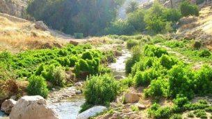 وادي القلط (ناحال بارت)، محمية طبيعية ومتنزه في صحراء يهودا، إسرائيل.  (Public domain/Wikipedia)