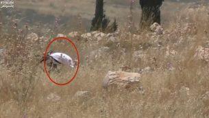 لقطة شاشة من مقطع فيديو يظهر فيها كما يُزعم جندي إسرائيلي خارج الخدمة يقوم بإشعال البنار في حقل تابع لمزراغين فلسطينيين في شمال الضفة الغربية، 17 مايو، 2019. (YouTube)