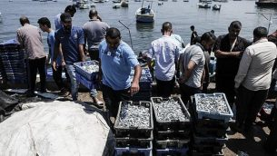 صيادون فلسطينيون يفرغون السمك الطازج في ميناء مدينة غزة المطل على البحر الأبيض المتوسط، 18 يونيو، 2019.  (Photo by MAHMUD HAMS / AFP)
