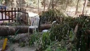 لقطة شاشة من مقطع فيديو من موقع حادثة مقتل طفل (10 سنوات) بعد سقوط جذع شجرة عليه في متنزه ترفيهي بالقرب من لاخيش، 17 يوليو، 2019. (Twitter)