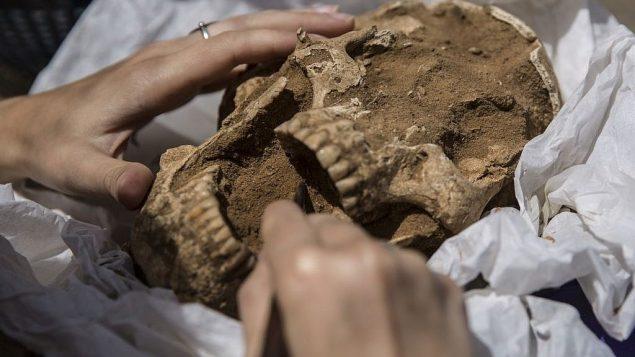 جمجمة من القرن  التاسع -العاشر قبل الميلاد في عمليات تنقيب أثرية  لمقبرة فلستينية تقوم بها 'بعثة ليون ليفي إلى عسقلان'. (Tsafrir Abayov/Leon Levy Expedition)