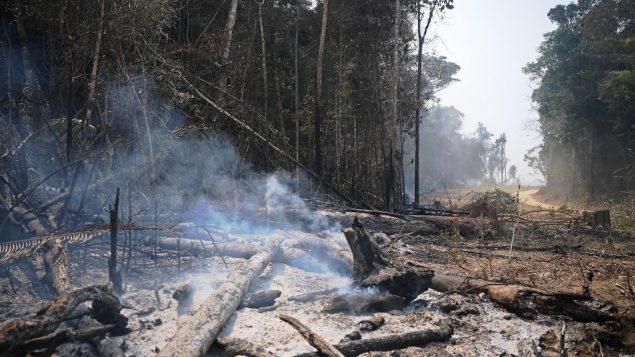 الدخان يتصاعد من اشجار محروقة في غابات الأمازون البرازيلية، 24 اغسطس 2019 (CARL DE SOUZA / AFP)