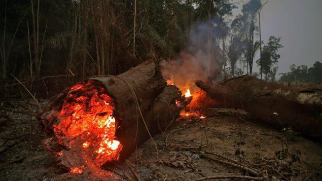 حريق في غابات الأمازون، شمال البرازيل، 24 اغسطس 2019 (CARL DE SOUZA / AFP)