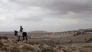 صبي فلسطيني يمتطي حمارا بالقرب من معبر المستوطنات E1، مع مستوطنة معاليه أدوميم في الخلفية. (AP/Sebastian Scheiner)